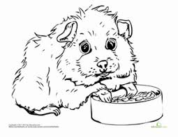 Small Picture Guinea Pig Worksheet Educationcom