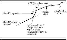 Oxygen Consumption Chart Experimenting With Isolated Mitochondria State Iii Respiration