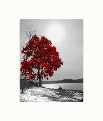 black white red wall art tree lake