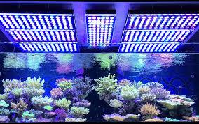 why the orphek atlantik v3 plus is the best reef light available orphek