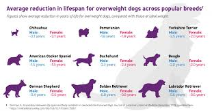 Research Reveals Overweight Dogs May Live Shorter Lives