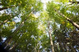 Image result for biomass energy
