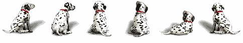 Image result for dog divider