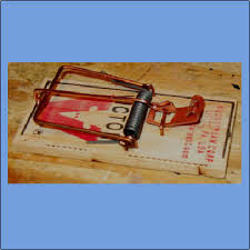 mouse trap car essay sergio s mousetrap car grizzly physics projects mousetrap cars are fun science fair projects