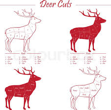 This cut of deer meat is typically. Deer Venison Meat Cut Diagram Sheme Stock Vector Colourbox