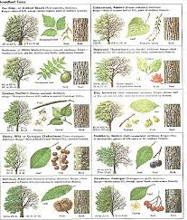 Best 25 Tree Identification By Bark Ideas On Pinterest  Tree Fruit Tree Leaf Identification