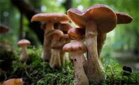Грибы и бактерии Грибы в лесу