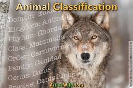 Animal Classification For Kids And Students How We Make