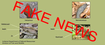 Snake Identification Chart Fake Snake News How Not To Identify A Poisonous Snake