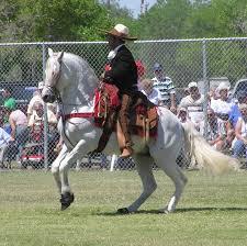 Azteca Horse Wikipedia