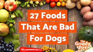 The 27 Worst Foods That Are Bad For Dogs Warning Toxic