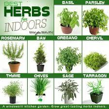 apartment herb garden. Herb Gardening Apartment Garden C