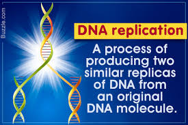 An In Depth Look At The 7 Major Steps Of Dna Replication