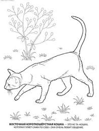 1980 best COLORING PAGES images on Pinterest   Farm animals further  moreover 1980 best COLORING PAGES images on Pinterest   Farm animals together with 50 best Desenhos para colorir  images on Pinterest   Drawings furthermore  besides  moreover 4505 best Color Unsorted images on Pinterest   Patterns  DIY besides 361 best coloring pages images on Pinterest   Free printable further  further coloring cat pictures to print   To print this handout please moreover new christmas snowman coloring page for kids   Projects to Try. on mary catt printable coloring pages