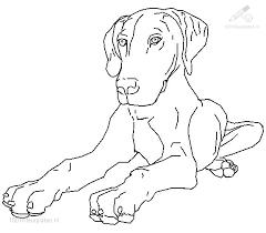 Kleurplaat Dieren Hond Liggende Hond