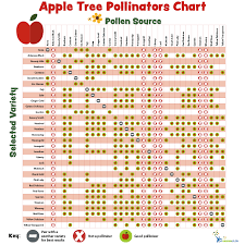 28 Paradigmatic Fruit Tree Pollinators Chart