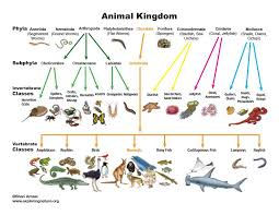 Animal Kingdom Taxonomy Chart Circumstantial Animal Classification Marine Animal