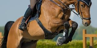 The Best Horse Joint Supplements Ingredients Guide