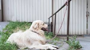 best dog chain tie out