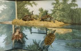 custom turtle docks