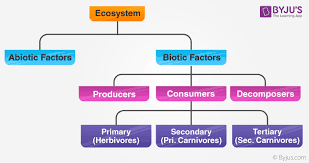 Components Of Ecosystem Flow Chart Ecosystem Structure Types Components Functions Of Ecosystem
