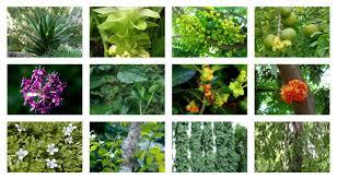 Medicinal flowering plants