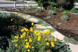 Xeriscape Landscape Design Drought Tolerant Landscape Design Home  Improvement Xeriscape Landscape Design Colorado