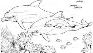 Dolphin coloring pages, dolphin coloring page, dolphins coloring pages, dolphin pictures, dolphin coloring book pages. 30 Free Dolphin Coloring Pages Printable