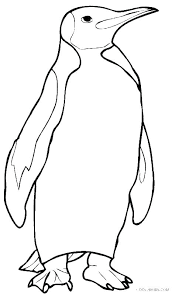 Coloring Pages Summer Penguin Coloring Pages Cute Baby Penguins Of