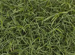 Tall grass texture seamless Grass Site Plan Tall Grass Texturescom Tall Grass Texture Background Images Pictures