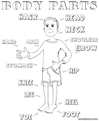Small Picture Body parts coloring pages Coloring pages to download and print