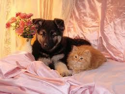 منذ متى و القطط تتصالح مع الكلاب؟ Images?q=tbn:ANd9GcT8znbld1WSbJEaChpNC8XKBctUQsfT9pDRW7TTDxoV4AAq1r__
