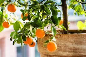 8 small fruit garden ideas urban