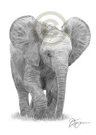 Baby Elephant Drawings Baby Elephant Art Pencil Drawing Print A3 A4 Sizes Signed Artwork
