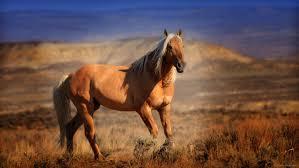wild horses mustang running. Fine Mustang Wild Horses Mustang Running  Photo28 And Horses Mustang Running U