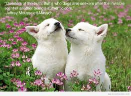 Love Animals Quotes Delectable Best Animals Quotes On HD Images