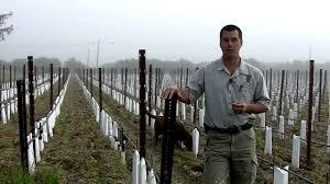 Vine Spacing Chart In The Vineyard Effects Of Narrow Spacing Of Vines