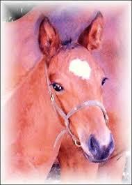 """Résultat de recherche d'images pour """"marques de la tête du cheval pelote"""""""