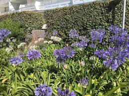 seaside garden plants uk plants for
