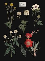 Botanical Chart Print Diy Botanical Chart With Printable