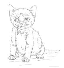 Disegno Di Gattino Da Colorare Disegni Da Colorare E Stampare Gratis