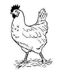 Small Picture Stunning Chicken Coloring Book Images Coloring Page Design