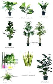 best office plants no sunlight. Good Office Plants Best For Great Cubicle No Sunlight U