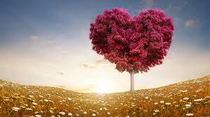 love heart tree wide wallpaper 50423