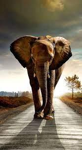 Elephant HD Wallpaper 1080P (Page 7 ...