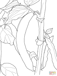Green Bean Coloring Page From Beans