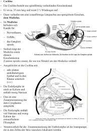 Embryologie Innenohr Pdf