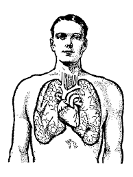 Small Picture Homey Ideas Human Body Coloring Page 17 Pages For Human Body