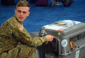 A Florida soldier cared for an abandoned puppy in Syria. On ...