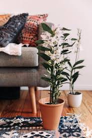 good exciting office. Exciting Why Flowers Are Good For Your Office Design Luck Plant
